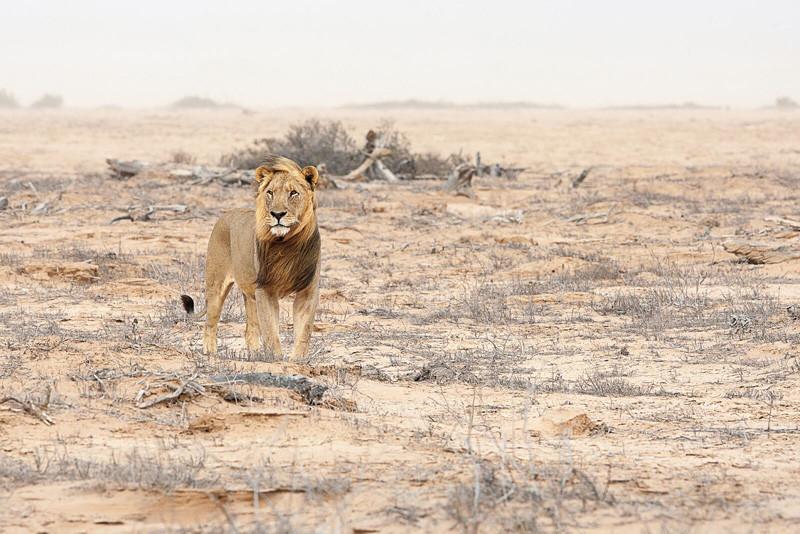Lionscape Coalition
