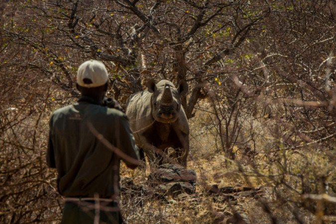 Rhino Ranger Programme